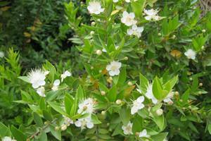 Rośliny egzotyczne - wiosenna pielęgnacja