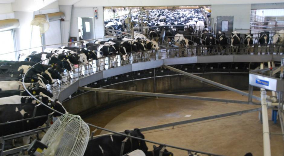 Ruszyło Europejskie Centrum Obserwacji Rynku Mleka