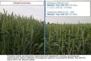 Zalecenia stosowania produktu Medax Top 350 SC w fazie liścia flagowego zbóż