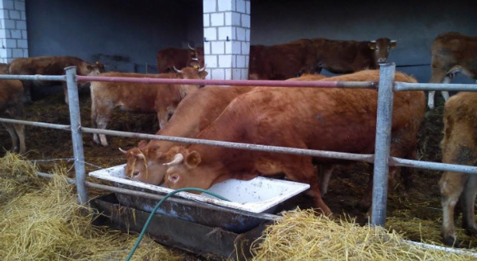Woda na pastwisku czyli jak zadbać o prawidłowe pojenie bydła