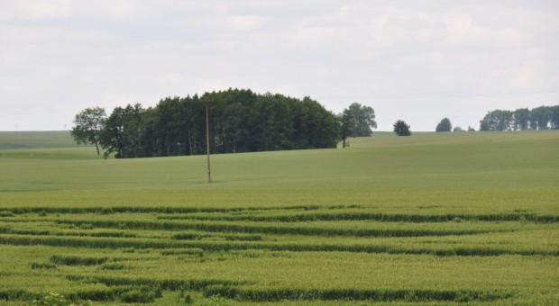 Ile kosztuje ubezpieczenie zbóż?
