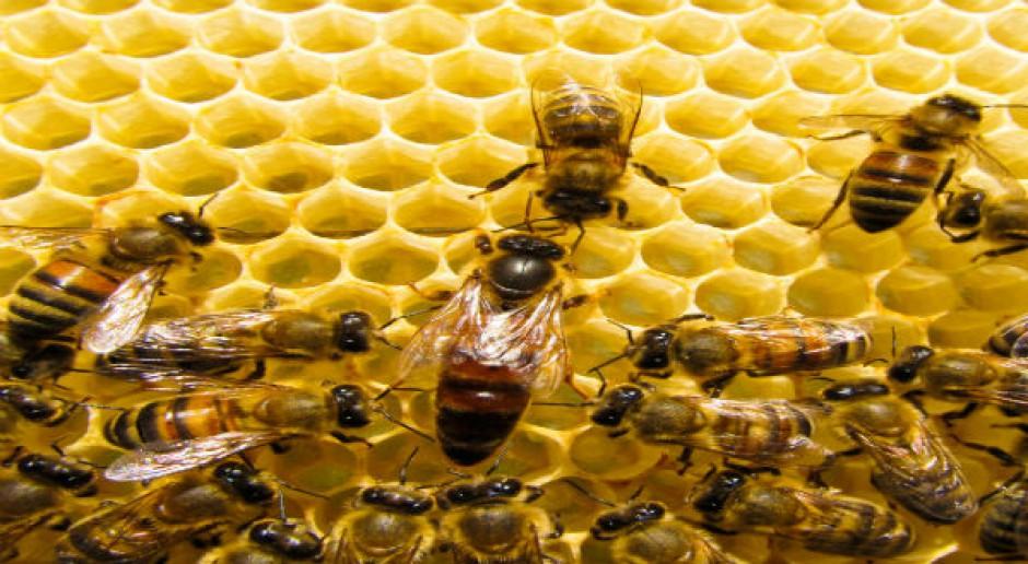 Greenpeace: rolnictwo ekologiczne ratunkiem dla pszczół