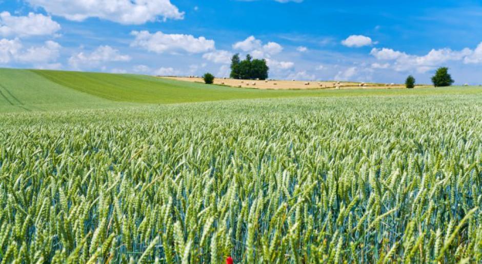 Izba Zbożowo-Paszowa: rynek zbóż jest stabilny