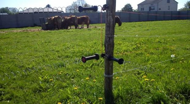 Montujemy pastucha elektrycznego dla bydła