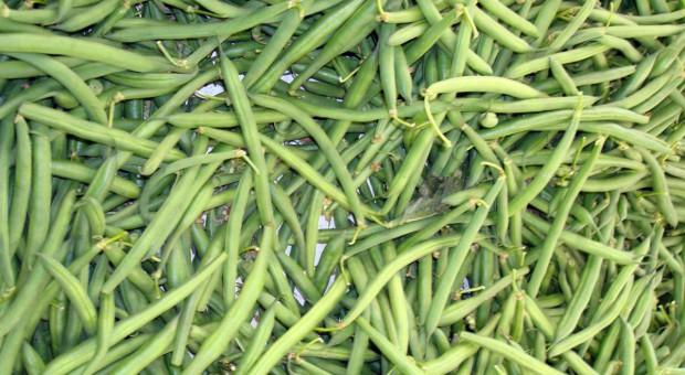 Wysiewamy fasolę szparagową