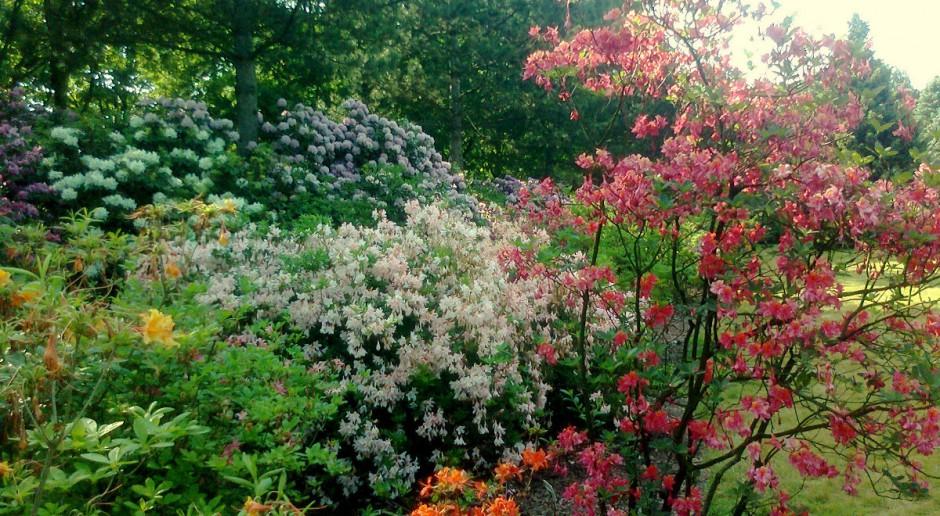 Pierwsze w kraju studia z leczniczego wpływu ogrodów