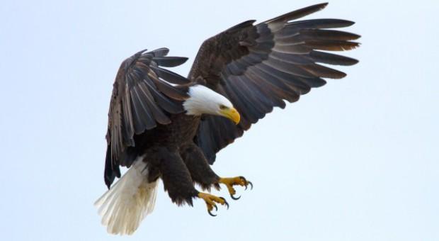 Edukacja o drapieżnych ptakach w Białostockim Muzeum Wsi