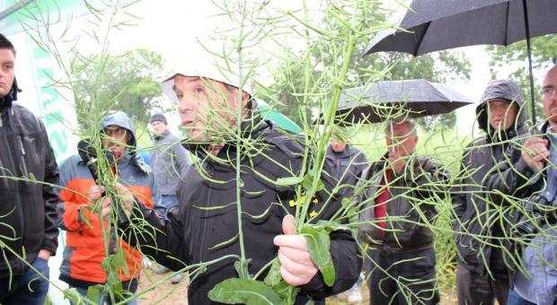 Dokarmianie azotem w fazie zielonej łuszczyny