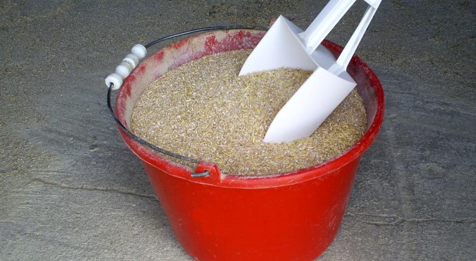 Jakie ziarno zbóż podawać krowom?
