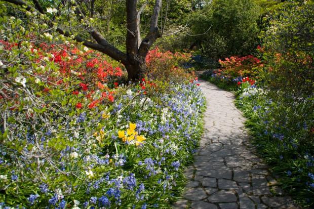 Alejka w ogrodzie