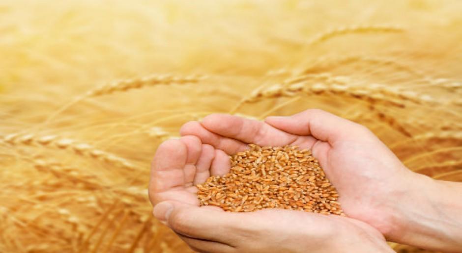 Wyprzedaż surowców rolnych na światowych giełdach