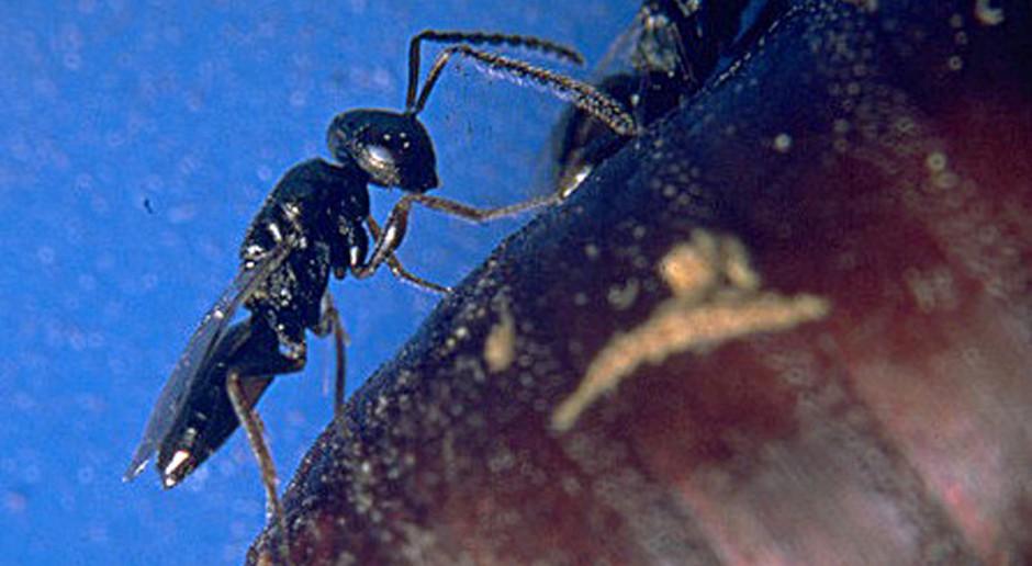 Oręż w walce z uciążliwymi owadami