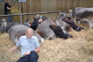 Wystawa bydła w Danii jedną z największych w Europie
