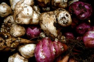 Topinambur – uniwersalna roślina