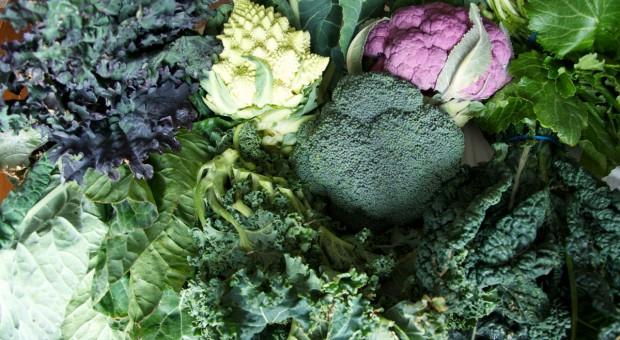 Ważne nawożenie borem roślin kapustnych