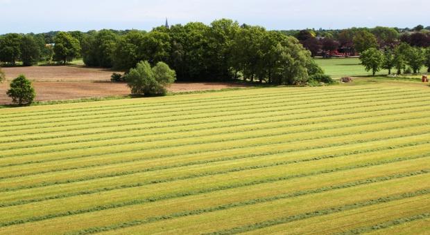 Łąki należy wykosić do końca lipca