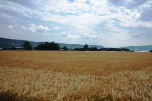 Dane dotyczące roślinnej produkcji rolniczej 2014