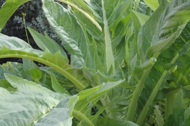 Bielenie warzyw