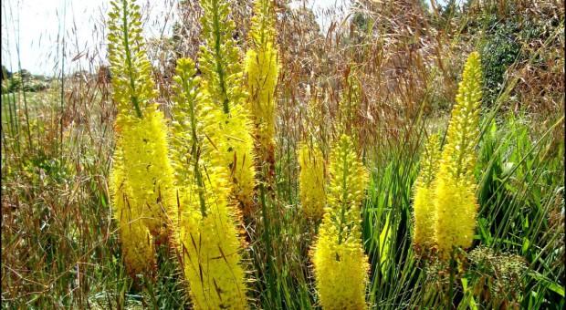 Pustynniki - rośliny stepów
