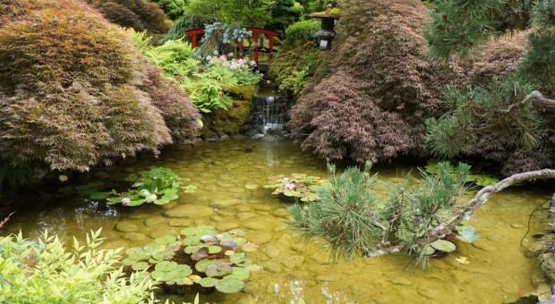 Jak zbudować strumień w ogrodzie wodnym?