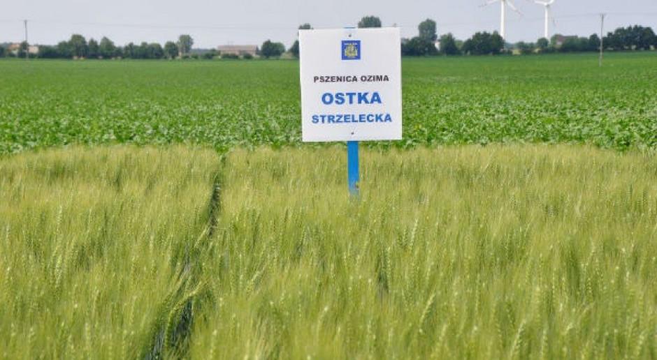Najcenniejsze odmiany zbóż ozimych