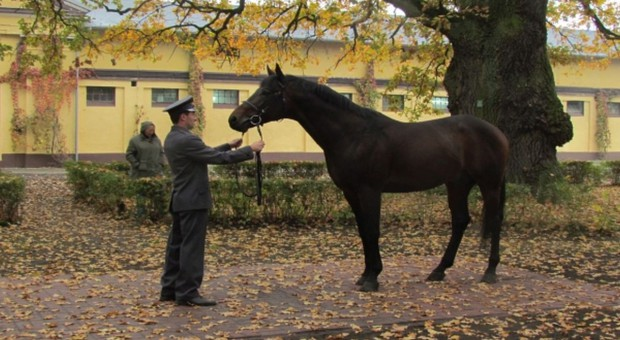 Hodowla koni poza ANR?