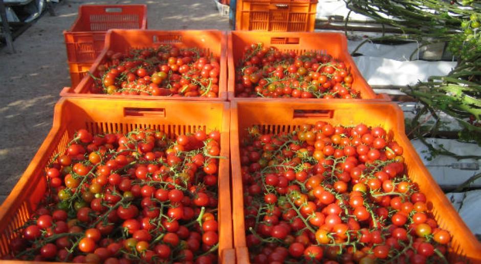 4,5 tys. rodzin otrzyma bezpłatne owoce i warzywa z UE