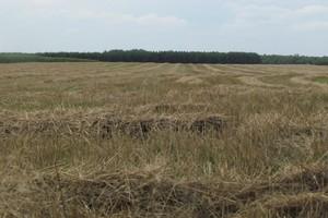 MSW: Polska ziemia jest dobrze chroniona