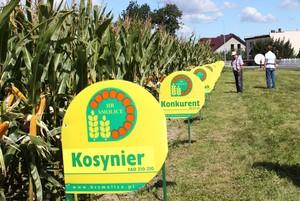 Kolekcja Smolickich odmian kukurydzy