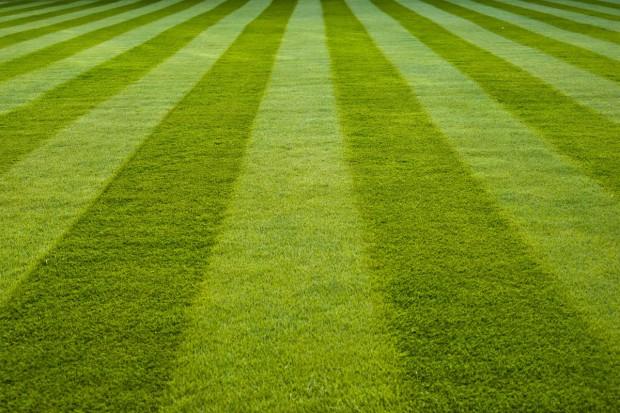 Zakładanie trawnika na jesień