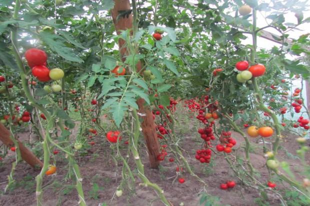 82 mln euro na wsparcie dla producentów jabłek i gruszek