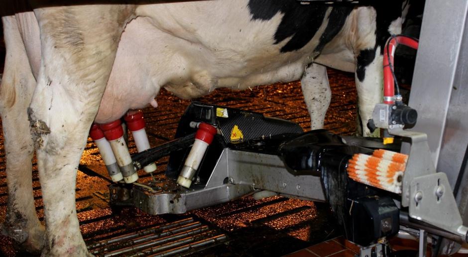 Ekspert: Wysokie ceny pasz powodują spadek opłacalności produkcji mleka