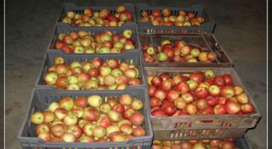 Banki żywności otrzymały pierwsze dostawy owoców