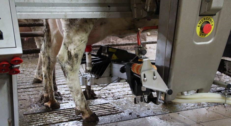 Kara za nadprodukcję mleka 29 groszy za kilogram
