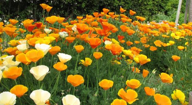 Jesienny wysiew kwiatów do gruntu