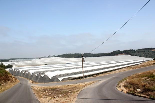 Młody rolnik w Portugalii