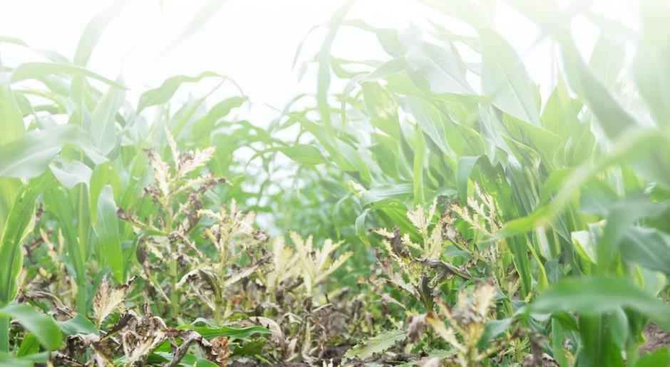 Mechanizmy działania herbicydów