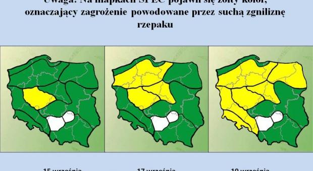 Pojawiło się jesienne zagrożenie występowania suchej zgnilizny kapustnych