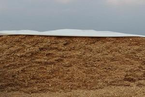 Stabilna tlenowo kiszonka z kukurydzy