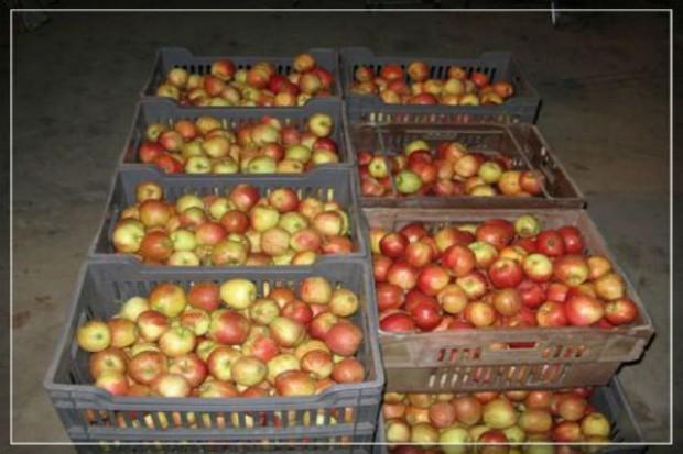 Na największym placu w Rzymie rozdawano polskie jabłka