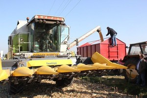 Kukurydza mokra tylko po 300-370 zł/t netto