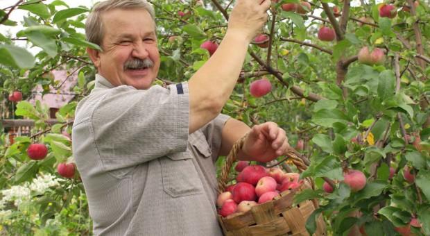 Polscy sadownicy rozbijani planowo?