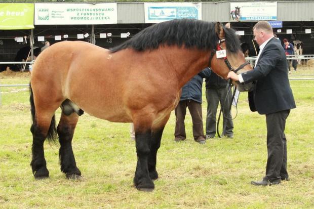 Włosi przepadają za koniną, eksportujemy tam konie