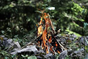 Co kompostować, a co można spalić?