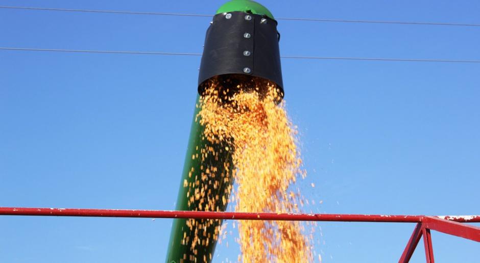 Żniwa kukurydziane nabierają tempa