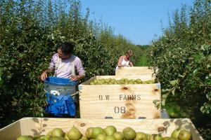FAO: gospodarstwa rodzinne dostarczają ponad 80 proc. żywności na świecie