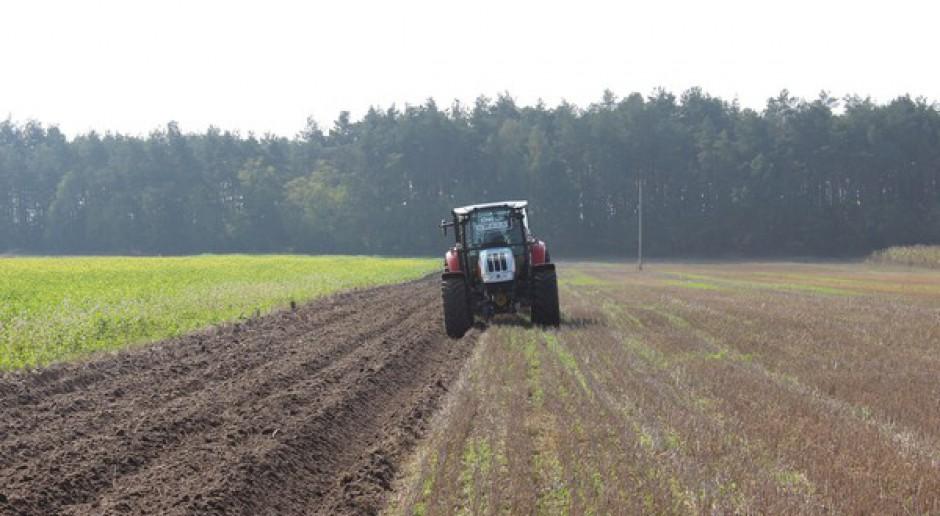 Gospodarstwo rolne zaorało 1000-letnie kurhany
