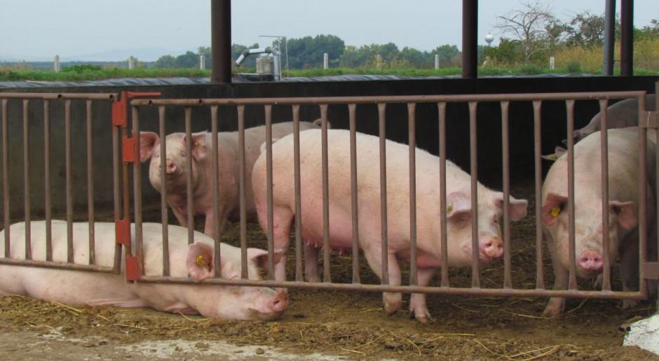 Na Białorusi znacznie spadła produkcja wieprzowiny