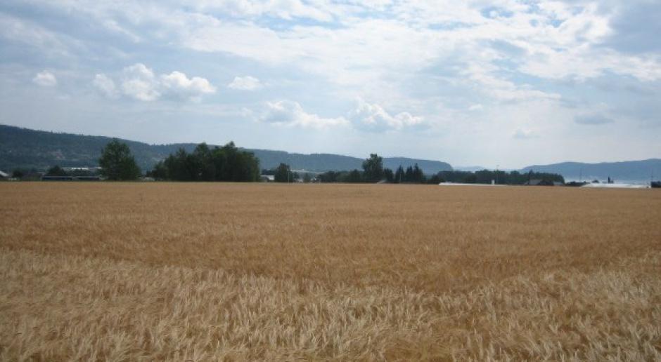 Pierwsze dopłaty trafiają na konta rolników