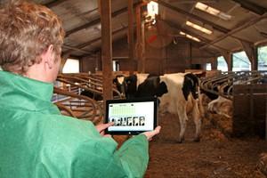"""""""Cows and more"""" - innowacyjny system oceny stada bydła mlecznego"""